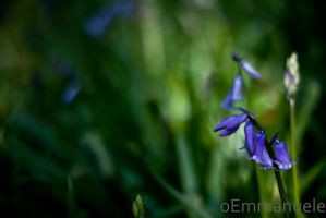 Bluebells - Day 124 - 04/05/13 by oEmmanuele
