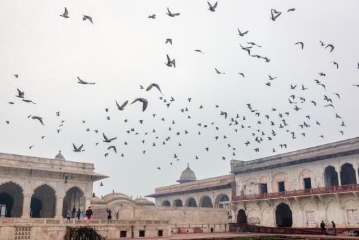 Incredible India - birds and historical monuments by Rikitza