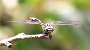 dragonfly 4568 by craigp-photography
