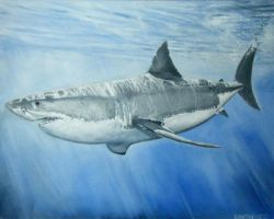 great white shark by iconicarts