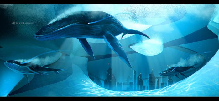 whales by sheer-madness