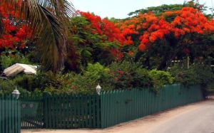 Grand Cayman Color by photowizard
