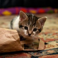 Princess 20100818 by FurLined