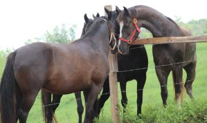 Multiple Horses 35 by MountainViewStock