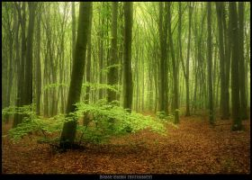 Magic forest 12 by manroms