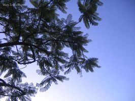 Leaves in early evening by Here-is-MaryLou