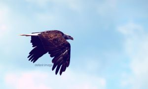 Memorial Day Eagle by defiant