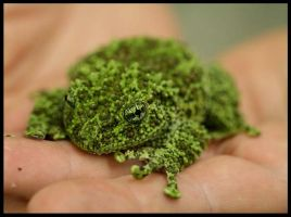 Mossy Frog by CriticalPhotography