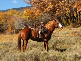 Horses 294 .:Stock:. by WesternStock