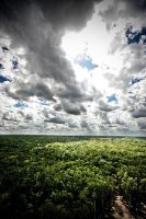 Mexico Jungle by Terence-G