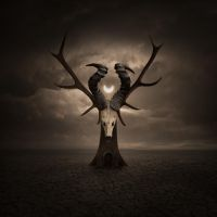 Horns II by Alshain4