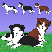 Border Collie Imports by Alcemistnv