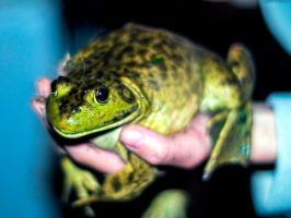 Jeremiah was a bullfrog by Mackingster