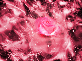 Rose-Wallpaper by Lagunamov