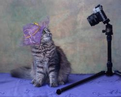 Cat photo shoot by Daykiney