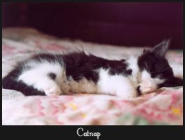 Catnap by OminousSeed