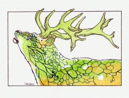 Red Stag by JMagnus