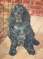 Tilly in Oils by T-Tiger