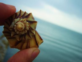 Sea shell by mryomero