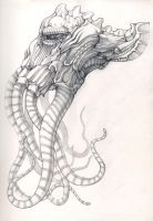 octopus by Flycan