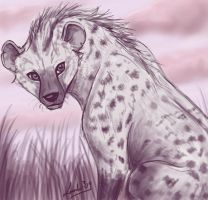 Hyena by Moolallingtons