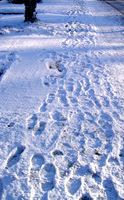 Footsteps In The Snow by heminder