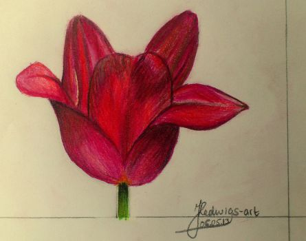 Red tulip (Day 129) by Hedwigs-art