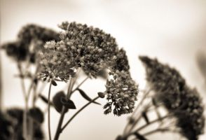 Monochrome flowers by LiveInPix