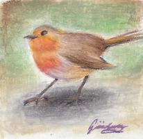 Robin red-breast by ColourChromaticism