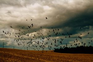 black birds 2 by incenseofmylife