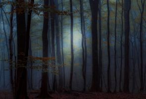 Forest 9 by LillianEvill