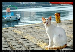 Cat at the dock 2 by LemnosExplorer