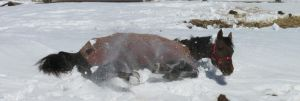 Rolling In The Snow! by Audrey-Taft