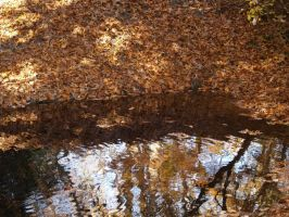 fall reflection by Irie-Stock