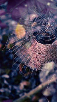 Spider Web by cannibalcoalition
