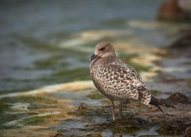 Just a Gull by JestePhotography