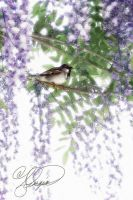 Sparrow in Wisteria by ForeverCreative