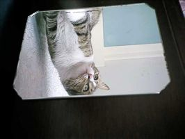 Cat Reflected by pattsy
