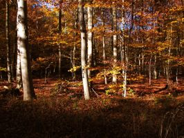 forest 37 by Pagan-Stock