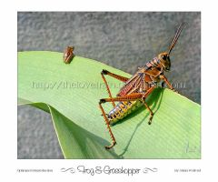 Frog and Grasshopper by TheLoveTrain