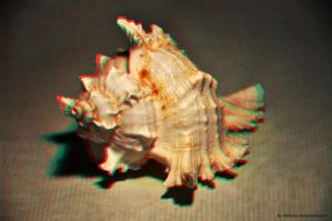 Anaglyph Conch by MTolotos