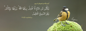 Surat Al-Ankabut Aya 60 -  FB Cover by LMA-Design