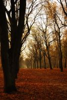 Autumn in Berlin by Evolve--R