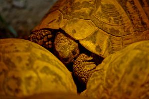 Turtle Warmth by Siresaturne