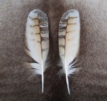 Bengal Eagle Owl wing feathers by Featheroes
