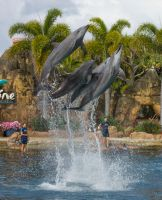 STOCK - Seaworld 2013-42 by fillyrox