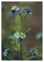 ..: Forget-me-not :.. II by Katosu