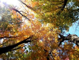 Colourful Fall Trees` by JohnstonColleen