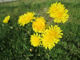 yellow flowers by Fotoback