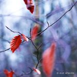 colors of winter 3 by EvaShoots
